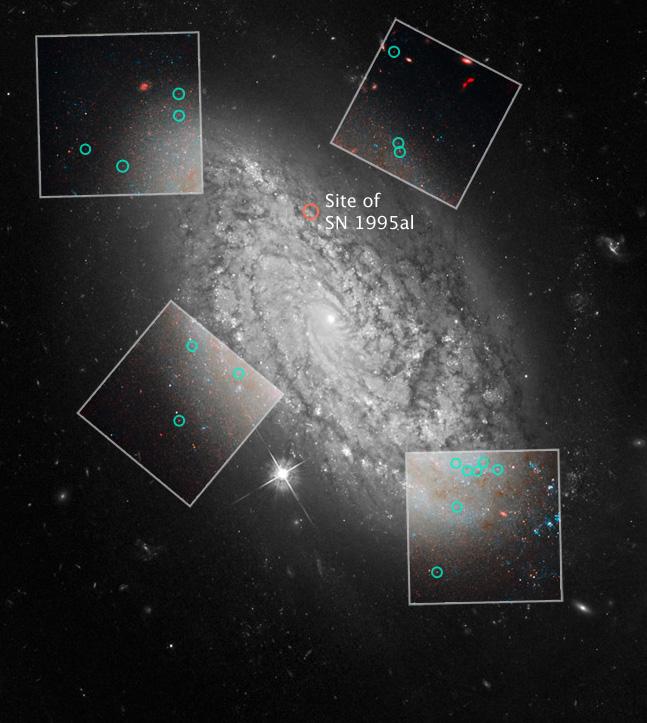Essa é uma imagem da galáxia espiral NGC 3021. Essa foi uma das diversas galáxias que sofreram explosões de supernovas tipo 1a observadas recentemente pelos astrônomos. A observação dessas supernovas ajuda a medir a taxa de expansão do Universo, a constante de Hubble. Além disso, o telescópio Hubble ajudou a apurar com maior precisão o comportamento das estrelas variáveis Cefeidas nesta galáxia, destacadas em círculos verdes nos quatro quadros. As Cefeidas pulsam em uma freqüência que é associada matematicamente ao seu brilho intrínseco. Tal fenômeno faz delas a 'vela padrão' ideal para a medição das distâncias intergalácticas. As Cefeidas são usadas para calibrar também outro 'marco de milha' que pode ser usado nas galáxias mais distantes, as supernovas tipo 1a. Crédito: NASA, ESA e A. Riess (STScI/JHU)