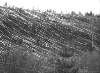 As árvores perto do rio Podkamennaya Tunguska na Sibéria ainda apareciam devastadas duas décadas após a explosão de junho de 1908. Crédito: Smithsonian Institution