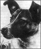 Laika a heroína espacial soviética de 1957
