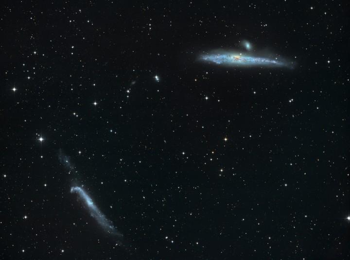 A baleia azul (NGC 4631) e o taco de hóquei (NGC 4656) por Josef Pöpsel e Stefan Binnewies