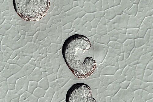 Monitoramento da erosão da capa residual de gelo no pólo sul marciano (ESP_014141_0930) Crédito: NASA/JPL/University of Arizona
