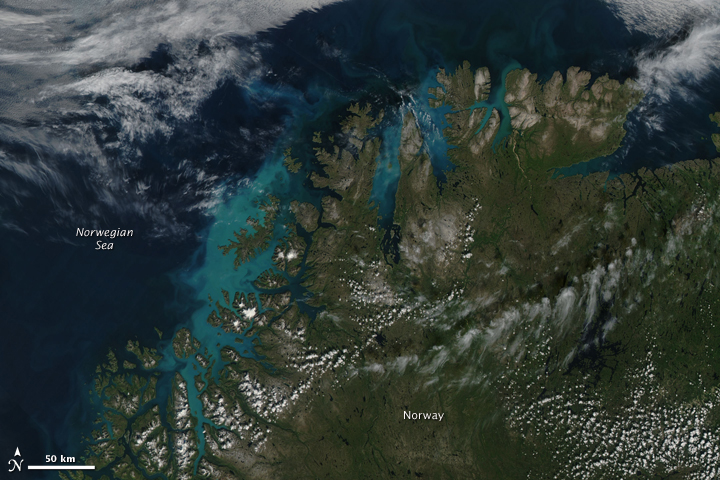 The waters of the Norwegian Sea were awash with color on August 4, 2009, when the Moderate Resolution Imaging Spectroradiometer (MODIS) on NASA's Aqua satellite captured this photo-like image. The brilliant shades of blue and green that fill the waters near the shore are likely phytoplankton, microscopic plant-like organisms that live in the surface waters of the ocean.  Northern summers bring long, sunlit days, giving the organisms plenty of time to grow and reproduce. Over the winter, when days are short and the water is covered with ice, nutrients build up in the surface waters. When summer returns, phytoplankton have an abundance of light and nutrients. Large blooms frequently develop throughout the Arctic.  Phytoplankton are the base of the marine food chain. Areas in which phytoplankton thrive—in the cold waters of the Arctic or Antarctic and in areas where currents bring nutrients to the surface—tend to support a rich and varied ecosystem. Phytoplankton are also an important part of the carbon cycle. The tiny organisms absorb carbon dioxide from the atmosphere as they grow. When they die, plankton sink to the bottom of the ocean, where the carbon is stored.