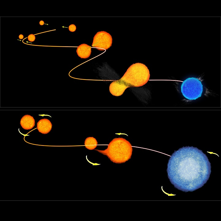 A ilustração demonstra duas maneiras pelas quais as estrelas rejuvenescidas (blue stragglers) se formam em aglomerados globulares. Na parte superior vemos o modelo colisional onde duas estrelas de menor massa em um ambiente agrupado experimentam uma colisão, fundindo-se em uma estrela azul mais quente. Na ilustração inferior vemos a vampirização realizada pela estrela menor que rejuvenesce roubando o hidrogênio de sua companheira gigante. Crédito: ESA/NASA/Hubble