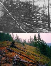 Os efeitos do impacto da explosão de possível fragmento cometário ou asteróide em Tunguska, 1908, ainda são visiveis atualmente. Crédito: Galena HS