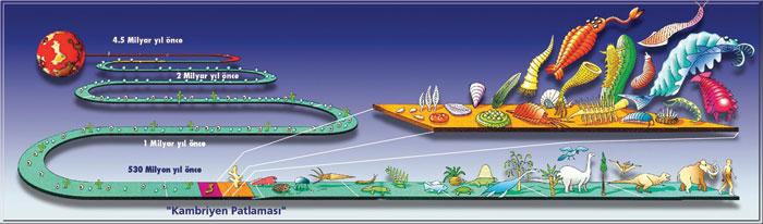 A evolução da vida na Terra e a explosão Cambriana: até há 600 milhões de anos, a vida na Terra consistia basicamente de algas, bactérias e plâncton. Então, no início da era Cambriana, em uma explosão criativa de diversidade que durou apenas 10 milhões de anos, a Natureza produziu uma variedade inigualável de animais multicelulares - os ancestrais de todas as criaturas que hoje nadam, voam e andam pelo nosso mundo. O que causou a explosão Cambriana? Este é um enigma que há décadas atormenta os cientistas.